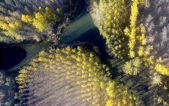 水庫防護林美景如畫