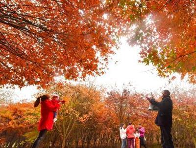 湖南桂陽楓林紅了 染紅空間美不勝收
