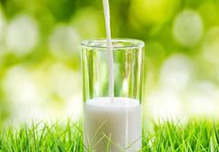 全国奶业发展规划发布