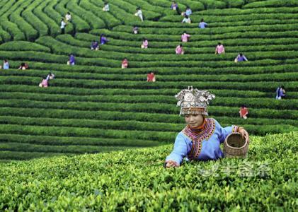 為給世界一杯凈茶:貴州每年多花50億元