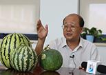 西瓜首席科學家:西瓜不需要使用防腐劑