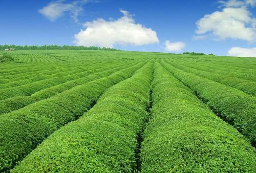 农业部:秋冬种生产着力推进绿色发展