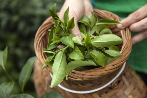 消费升级推动茶产业供给侧改革