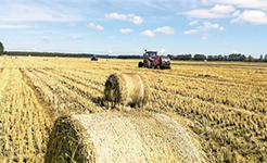 """聚焦绿色农业发展 秸秆利用如何""""点草成金"""""""