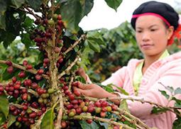 雲南省創新農産品品牌 不斷提高知名度