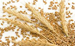芝加哥农产品期价3日涨跌不一