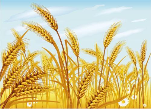 准确把握保障国家粮食安全的六个关系
