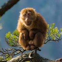 全球首發《伊利集團生物多樣性保護報告》