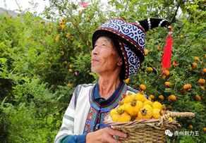 盤州市:小刺梨帶動大扶貧