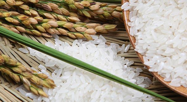 """""""優質糧食工程""""實施三年:農民增收 企業增效"""