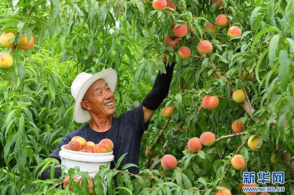 河北灤南:壯大果蔬産業 助推鄉村振興