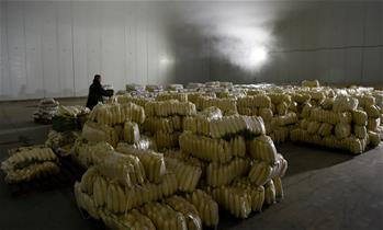 【高清圖集】海口:多措並舉保障節日菜蔬供應