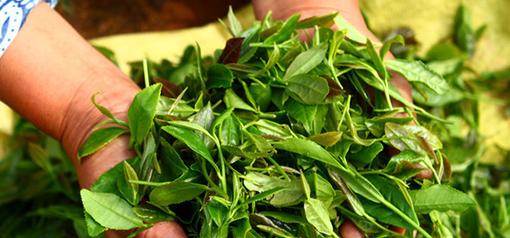 中國新式茶飲市場遠超咖啡 喝出4000億元大市場