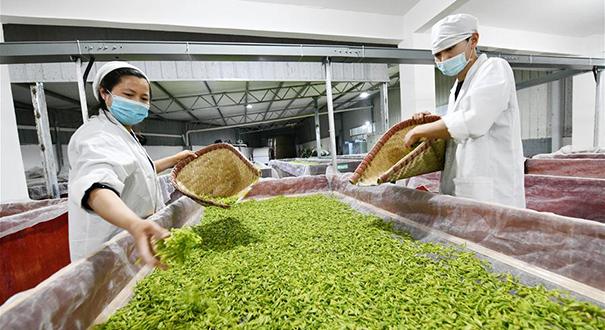 貴州遵義農業企業加速復工復産