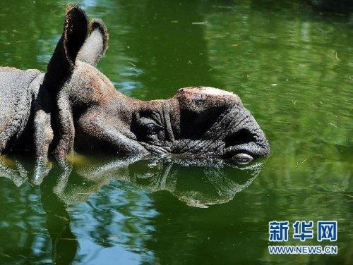 貴州:5人非法獵捕瀕危野生動物眼鏡王蛇獲刑