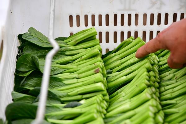 為實現小康之年農業豐收貢獻科創力量 ——北京市農林科學院積極做好戰疫情促生産工作