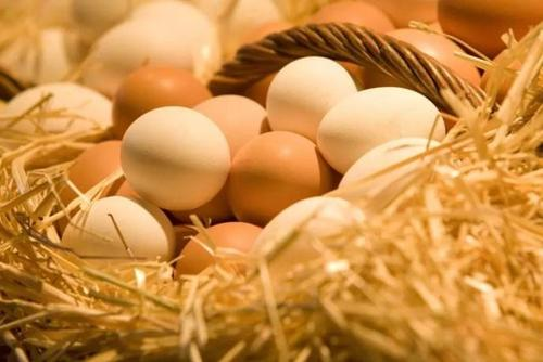 鸡蛋价格秋后或回升