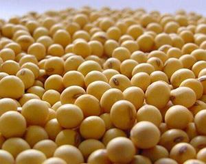 芝加哥农产品期价6日全线上涨