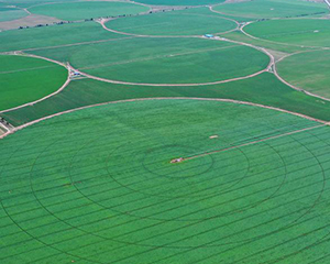 河北塞北:打造現代高效農業集群