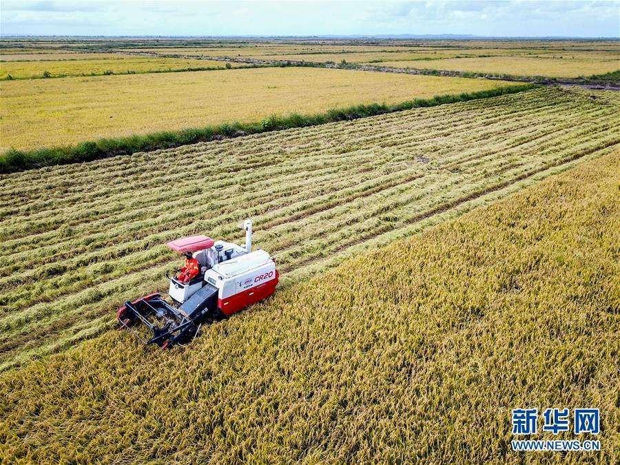 联合国发布《世界粮食安全和营养状况》