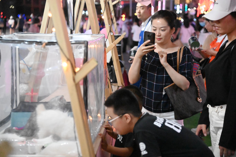 """【圖集】河南鄭州:""""萌寵""""助力夜經濟"""