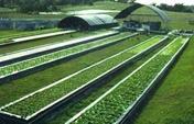 拜耳攜手螞蟻金服共建農業區塊鏈與價值鏈