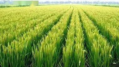 農業農村部:培育一批自主核心種源和節水高抗新品種