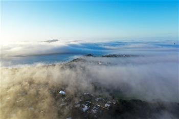 奧克蘭大霧彌漫