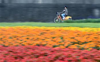 臺北河濱公園花團錦簇