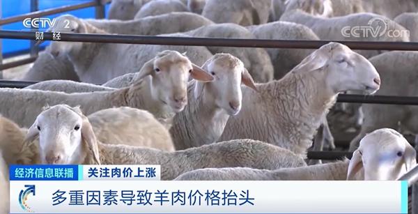 """肉价上涨!""""牛魔王""""""""羊贵妃""""""""猪刚强""""都来了,啥"""