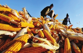 重點:聚焦農業供給側改革 實施種植業調結構