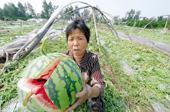 變與不變:連續三年聚焦農業現代化 今年農村金改著墨多
