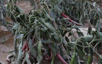 強降雨致貴州省農作物受災27010公頃