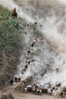 新疆伊犁河谷牧民開始秋季轉場
