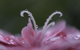 秋雨卷珠簾