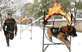 汪星人也有冬訓 神犬奇兵雪地突擊