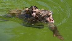 動物避暑有妙招