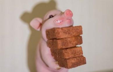 豬價漲幅意味著啥?