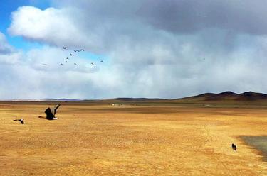 內蒙古:巡護踏查 保護候鳥