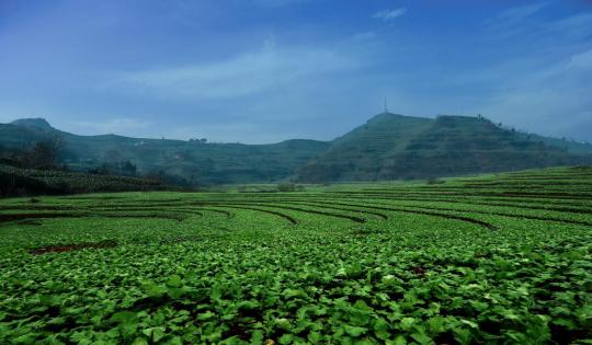 """重庆涪陵:生态先行 做好绿色发展""""生意经"""""""