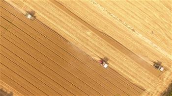 山東小麥收獲已過六成