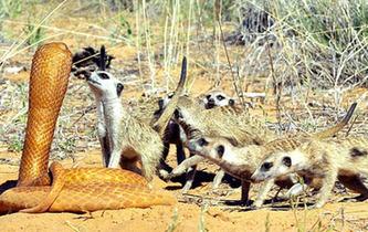 看攝影師如何近距離拍攝野生動物