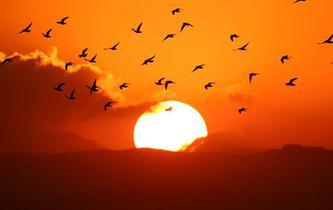 落日余暉中的飛鳥