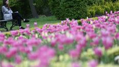 倫敦公園鮮花綻放