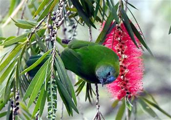 熱帶雨林 百鳥家園
