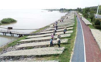 安徽巢湖:漁家曬秋 魚幹飄香