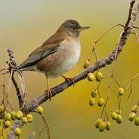 秋天羽毛豐滿的鳥兒