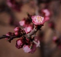 繁枝嫩蕊,春意盎然