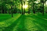 【新華調查】清明將至,生態安葬你接受嗎?