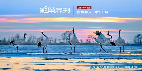 【影巢周刊】鶴舞寒天 仙氣十足